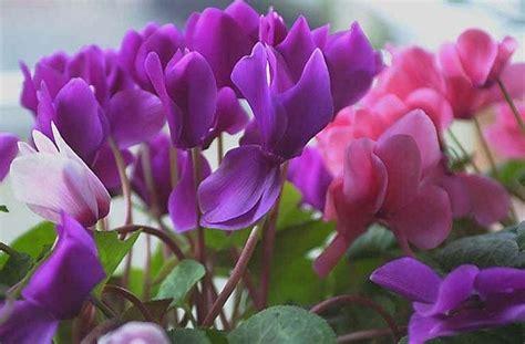 piante da vaso per esterno invernali piante da giardino invernali piante da giardino piante