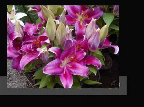 imagenes de flores mexicanas flores mexicanas 0001 youtube