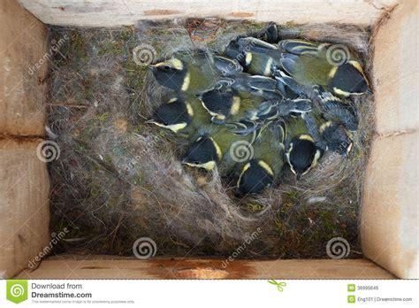 Woodpecker Bird House Images