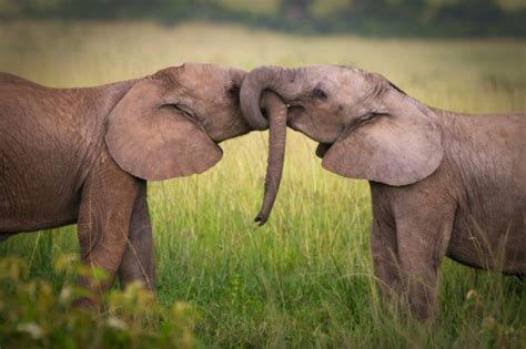 Animal Matting by Quotes About Friendship And Elephants Quotesgram