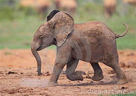 google images elephant baby elephant google search threads pinterest baby
