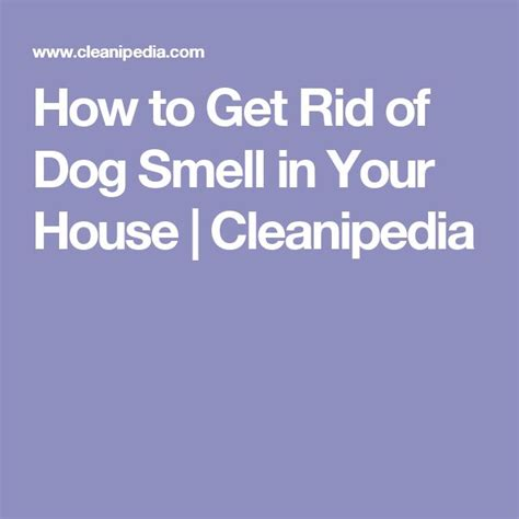 getting rid of dog smell in house 167 best cleaning images on pinterest households cleaning hacks and cleaning tips
