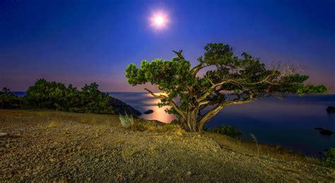 night tree coast lake moon hd wallpaper wallpaperscom