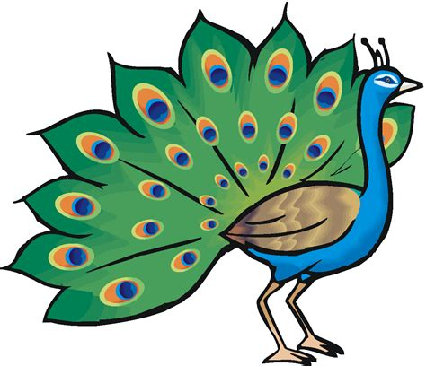 clipart co peacock clipart free cliparts co
