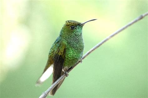 small hummingbird in subtropical forest hummingbird