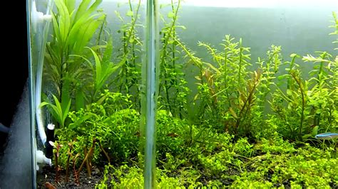 Co2 Package Aquascape 7 aquascape diy co2