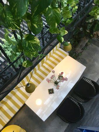 pug seal tennyson pug seal tennyson updated 2017 guesthouse reviews price comparison mexico city
