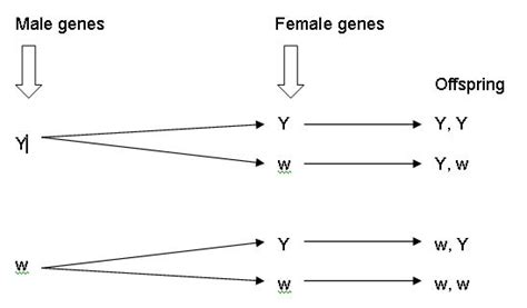 branch diagram genetics how to make a branch diagram genetics 28 images how to