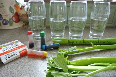 food coloring experiment celery and food coloring science experiment fspdt