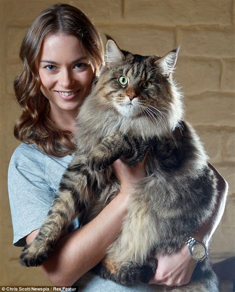 largest house cat fat cat rupert weighs in at 20lb and he is set to keep on growing daily mail online