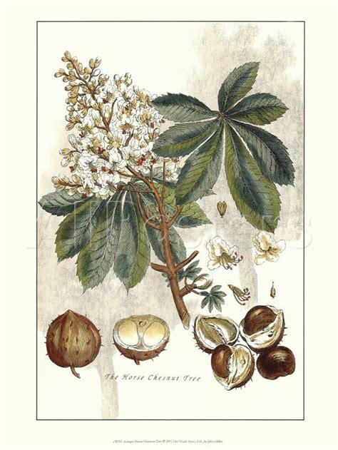 17 Best Images About Politics On Politics Nut - 17 best images about chestnut tree on