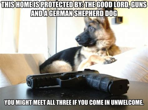 Funny German Shepherd Memes - funny german shepherd dog breeds picture
