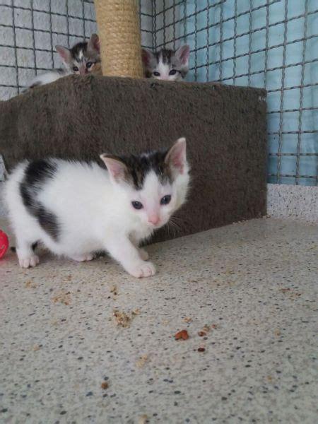 Kleines Katzenklo 900 by Home B 252 Ndnis F 252 R Tiere