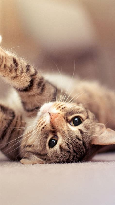 cat iphone backgrounds pixelstalknet