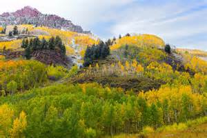 aspen fall colors fall colors in aspen colorado photograph by tim reaves