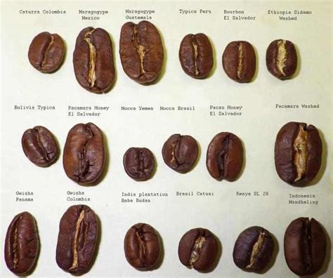 Why are all the coffee beans so small?