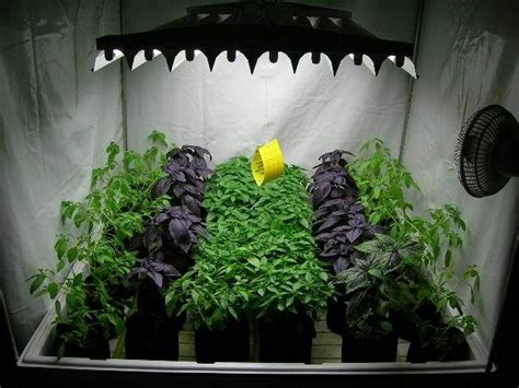 indoor hydroponic wall garden 177 best images about hydroponic gardening on pinterest
