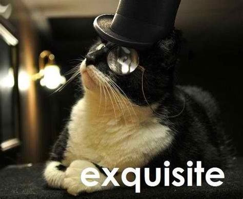 Fancy Cat Meme - funny cats how is that fancy feast