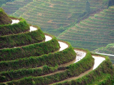coltivazione a terrazza viaggio in cina a guilin e longsheng le risaie a terrazze