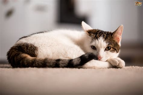 Removing Cat Urine From by Seven Top Tips For Removing Cat Urine From Your Home