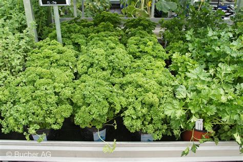 Gartenkräuter Pflanzen by Kr 228 Uter Bildergalerie Bucher Garten Widnau
