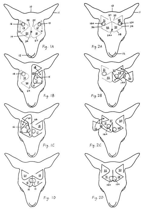 unicorn diagram diagram surgical procedure the unicorn