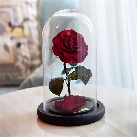 forever rose in glass real enchanted rose lasts 3 years without water or sunlight