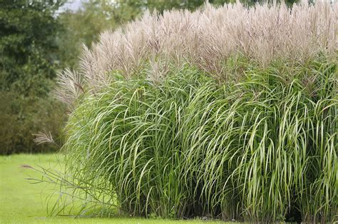 12 ornamental grasses that will stop traffic