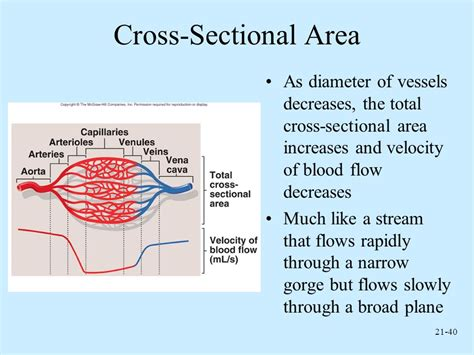 cross sectional area of a stream anatomy and physiology sixth edition ppt video online