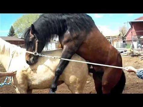 Hourse Matting by New 2014 Horses Mating Fully Naturally