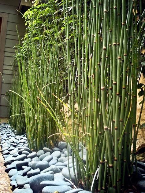 56 ideas for bamboo in the garden out of sight or decoration interior design ideas ofdesign