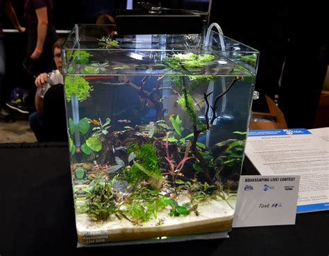 small tank aquascaping aquascaping live 2016 small planted tanks