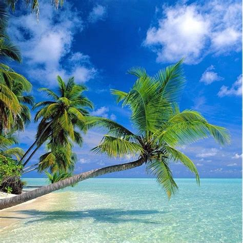 tropical palm trees tropical palm trees pictures photos and images for