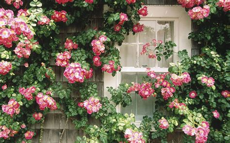 win with flower flowers in the window flower wallpapers free download