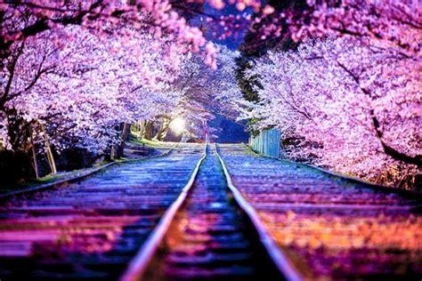 gambar bunga sakura terpopuler gambar animasi gif swf