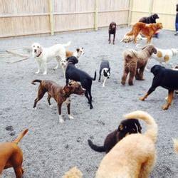 barking nyc the barking orange syracuse ny yelp