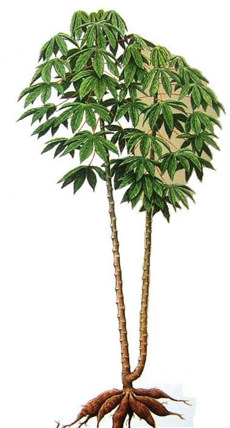 Nature Stek Pohon creepy singkong segalanya keepo