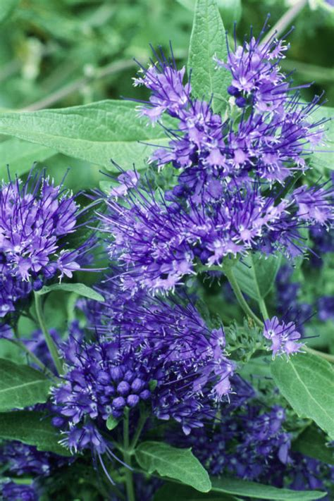 25 fall flowers and plants for an autumn garden