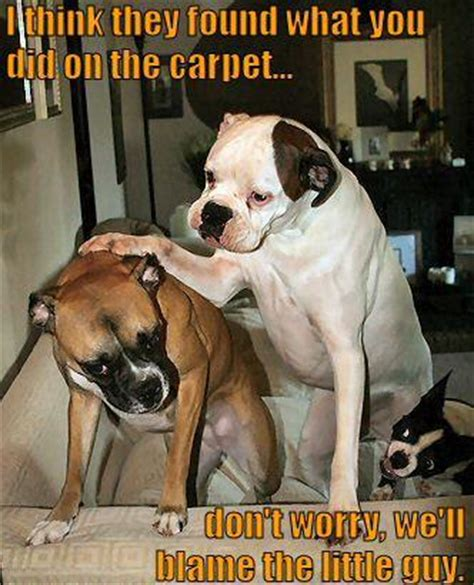 Karpet Jok I Think They Found What You Did On The Carpet
