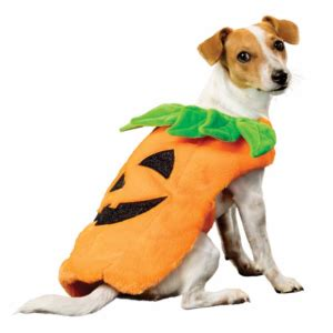 what does pumpkin do for dogs costumes for dogs pet hooligans