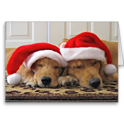 golden retriever cards 572 best dogs puppies images on merry and