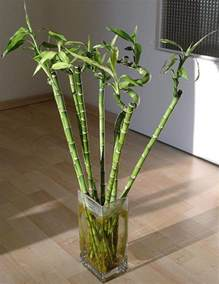 images of house plants types of bamboo house plants