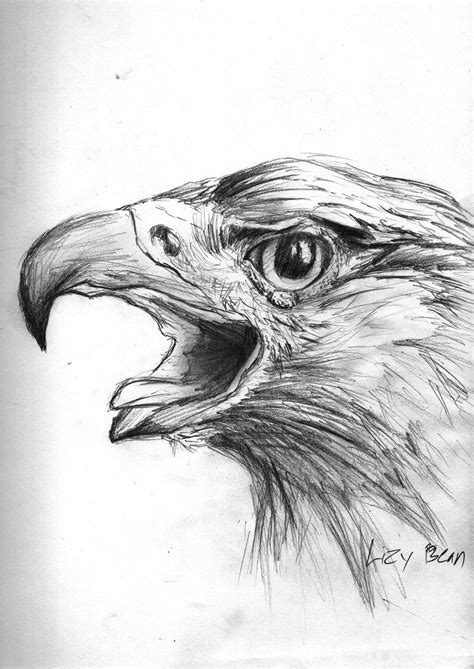 Lu Eagle Mexican Eagle Drawings Www Imgkid The Image Kid Has It