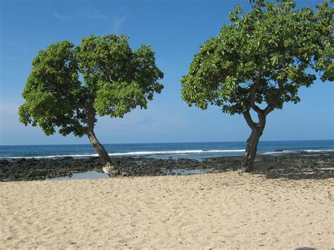 the indigenous trees of the hawaiian islands classic reprint books find hawaiian flowers and trees at akamai landscape