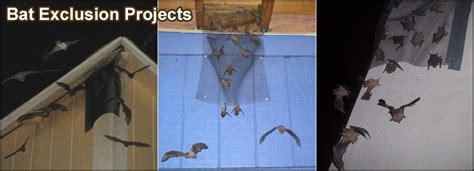 Bat Trap One Way Door by Raleigh Bat Removal Carolina Bat Company