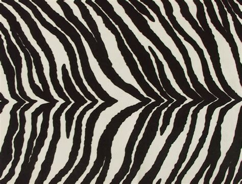 zebra design animal print zebra www imgkid the image kid has it