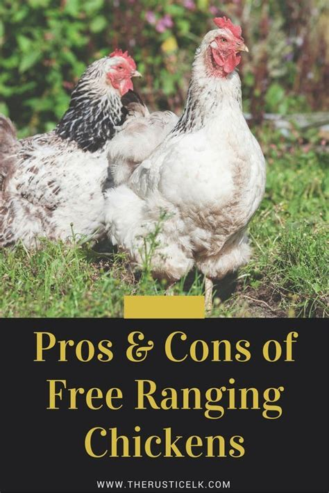 Backyard Chickens Cons 17 Best Images About Homestead Chickens On The