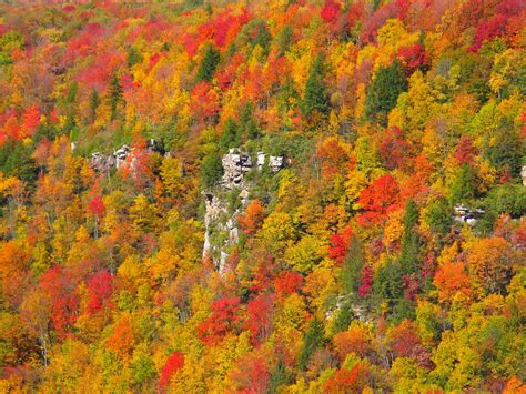 fall color file cliff fall colors blackwater west virginia