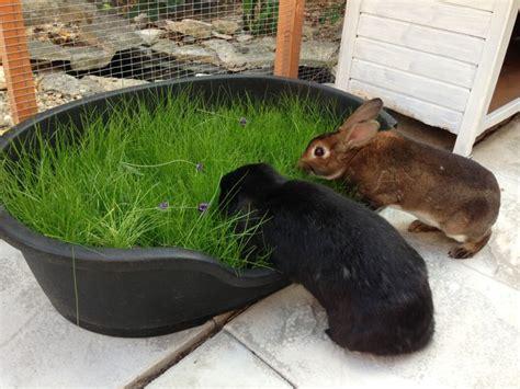 best bedding for rabbits 25 best rabbit ideas on pinterest rabbit toys rabbits