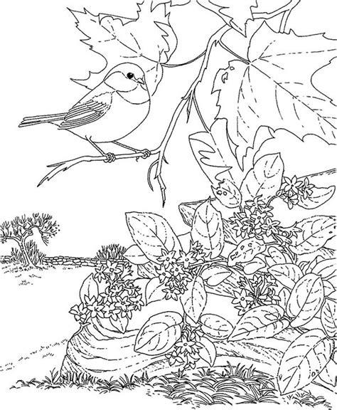 chickadee bird coloring page chickadee how to draw a colouring page chickadee bird